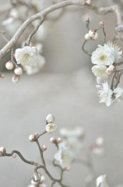 If keep yourself feeling guilt free with some Healthy Vegan recipes at yummspiration.com Come Like us on facebook.com/yummspiration Come join the discussion! Feel great! Be Great!: White Blossoms, Beautiful Flowers, Photo, Garden, Spring Blossoms, Apple B