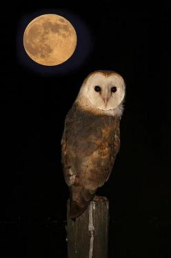 If you want life, then for life there is no fixed road. Life is here and now, multi-dimensional, spreading in every direction.  --Osho: Birds Owls, Beautiful, Month, Night Owl, Full Moon, Owl Animal, The Moon, Barn Owls