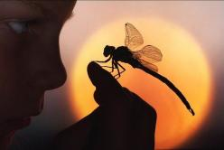 Illusion, the Power of Light - The dragonfly inhabits two realms: air and water. Emotional and passionate in their early years (water) and more balanced with greater mental clarity/control as they mature (air). The essence of the winds of change, the mess