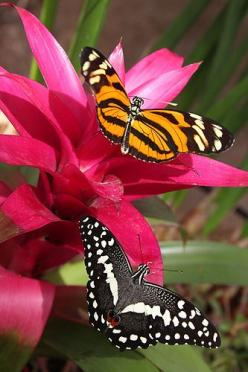 IMG_5318a   Flickr - Photo Sharing!: Beautiful Butterflies, Butterfly, Lime, Flowers, Photo, Animal