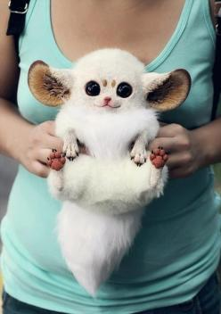 Inari Foxes - is this real?  Looks like a stuffed animal.  IF THIS IS REAL I NEED ONE: Animals, Cuteness Overload, Real Life, Stuff, Pet, Funny, Adorable, Inari Foxes