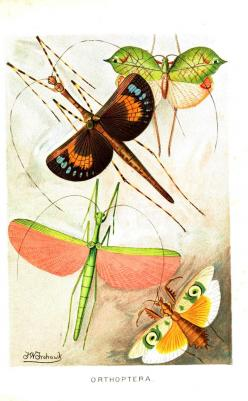 insects: Butterfly, Vintage, Butterflies Insects, Things, Insect, Winged Insects, Art Insects, Animal