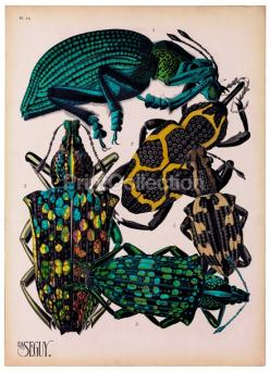 Insects, Plate 14: Plates, Art, Illustration, Insects