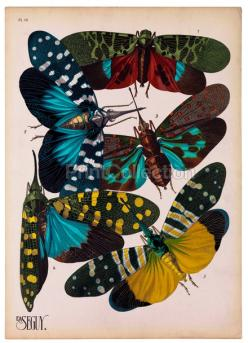 Insects, Plate 16: Plates, Butterflies, Art, Illustration, Insects Plate, She, Design