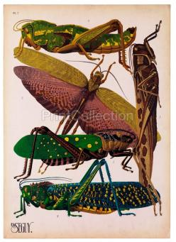 Insects, Plate 7: Bugs, Art, Illustration, She, Insects