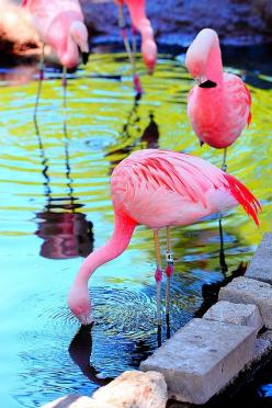 Inspiration For The Puppy Bed Flamingos-: Animals, Inspiration, Pink Flamingos, Color, Beautiful, Things, Birds, Photo