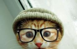 is it just me, or does this kitty look like Justin Timberlake?: Cats, Hipster Cat, Kitten, Animals, Hipster Kitty, Pet, Funny, Things, Hipstercat