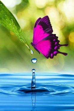 Is this photo for real?  Bubbles look drawn on, color is fake looking.  Clue me in, please!: Beautiful Butterflies, Pink Butterfly, Water Drops, Beautiful Colors, Flutterby, Animal