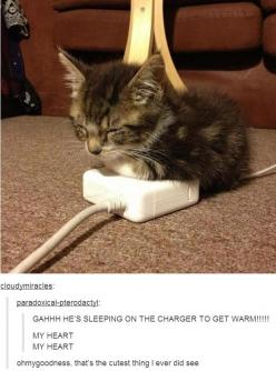 It's cute until he chews *through* the damn wire.  Then it's $86 for a new laptop charger.  True story.: Cats, Animals, Warm, Meow, Funny, Kittens, Kitty, Cat Lady