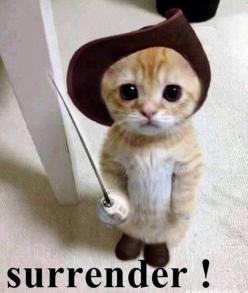 It's Puss in Boots! Again!: Cutest Animals Funny, Cats In Boots, Funny Pictures Of Animals, Costume, Box, Cute Cats And Kittens, Cats Kittens, Kitty, Surrender My Heart