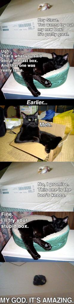 it's the simple things.: Giggle, Funny Cats, Boxes, Crazy Cat, Hey Steve, Animal
