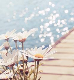 "it's weird, if you were to ask me where i would like to be yesterday, i would have said there. but today i would say ""it's somewhere to be for next summer"": Picture, Nature, Beautiful, Daisies, Daisy, Things, Summertime, Flowers, Photograp"