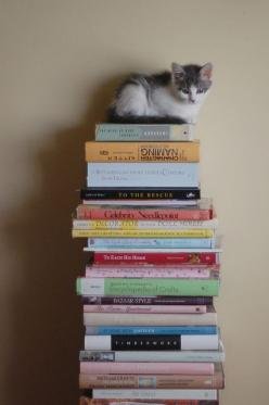 It scares me how much I love cats... because I really wouldn't mind becoming the old cat lady. Which I think confirms that I will.: Cats, Kitty Cat, Favorite Things, Kittens, Stack Of Books, Cat Lady, Animal
