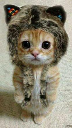 it sooooooooooooooooo cute: Cats, Animals, So Cute, Pet, Funny, Kittens, Kitty, Has