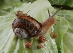 Jumpstart a writing activity with an interesting photo!: Snails, Babies, Animals, Nature, Mother, Creature, Families