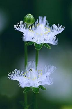 Just beautiful-who can question Gods existence when they see something as amazing as this?: White Flowers, Nature, Flowers Plant, Unusual Flowers, Beautiful Flowers, Bloom, Beauty, Garden, Flower