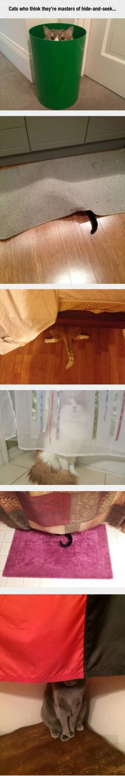 Just pretend you can't see him - he'll think he's won the game.: Cats Cats, Cats Xd, Cat Hide, Kitteh, Funny Cats, Cats Hiding, Cat Masters, Animal