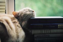 Kitten and books.: Kitty Cats, Books, Reading, Animals, Catnap, Meow, Cat Naps, Kittens, Photo