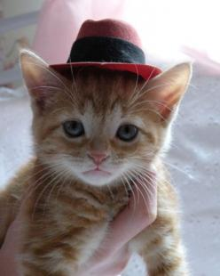 kitten in a hat!  Uh oh!  We need another kitten so we can put tiny hats on it and take pictures!!!: Hats, Kitty Cats, Animals, Meow, Pets, Kitty Kitty, Kittens, Kitties