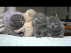Kittens waking up from a nap. I have no words for the amount of cuteness this video contains.: Adorable Kittens, Cute Cat Video, Funny Cats Videos, Kittens Waking, Funny Cat Video, Funny Videos Of Animals, Kitty