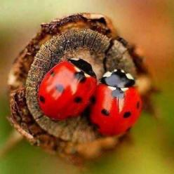 Ladybug, Ladybug, Fly Away Home   Winter Is Coming, The Summer Has Gone!   ~ The Flowers Have Bloomed,   Autumn Leaves Are Falling ~   Time To Find A Cozy Spot Til Spring Comes Calling!: Ladybird, Animals, Nature, Creature, Beautiful, Ladybugs, Ladybird,