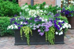 lavender and white summer planting..I don't usually like many combination plantings in containers (probably partly because I group containers) but I like this one.: Garden Container, Windowbox, Container Gardening, Color Combination