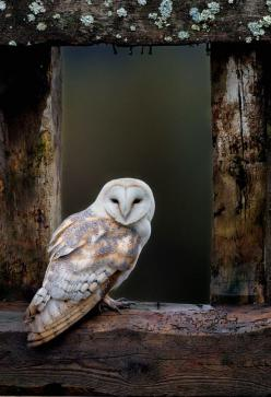 Leave your Hollywood preconceptions behind, forests are wonderful places to visit after dark, writes Phil Daoust: Animals, Window, Children, Barnowl, White Owl, Birds, Barn Owls