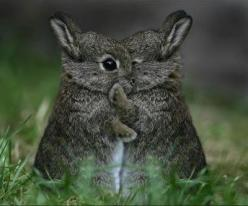 let me tell you a secret..: Rabbit, Cuteness, Sweet, Bunny, So Cute, Baby Bunnies, Adorable, Things, Baby Animals