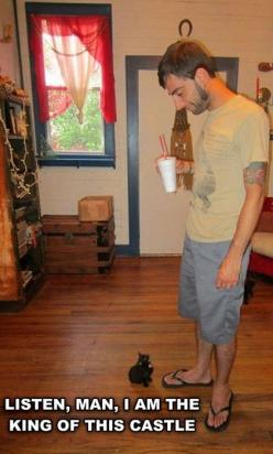 Life with Cats: Cats, Animals, Kitten, Funny Cat, Funny Stuff, Humor, Funnies, Funny Animal