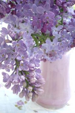 Lilac-we had so many bushes on the farm when I was growing up.  The smell still reminds me of spring when I was little...: Purple, Color, Lavender, Garden, Spring, Favorite Flower