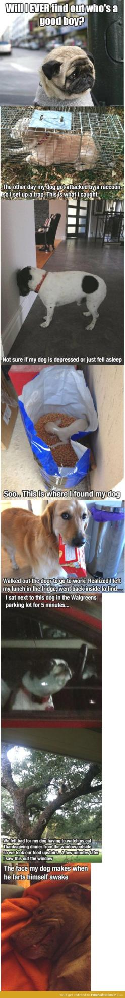LOL dogs are great: Giggle, Funny Dogs, Silly Dogs, Puppy, Dog Funnies, So Funny, Animal