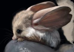 Long eared Jerboa, Euchoreutes Naso, is a nocturnal mouse  like rodent with a long tail, long hind legs for jumping: Animals, Pet, Creatures, Adorable, Earedjerboa, Cutest Animal, Long Eared Jerboa