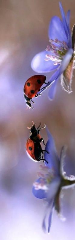 Love at first sight - Ladybugs!****FOLLOW OUR UNIQUE GARDENING BOARDS AT www.pinterest.com/earthwormtec *****FOLLOW us on www.facebook.com/earthwormtec & www.google.com/+Earthwormtechnologies for great organic gardening tips #beneficial #garden #ladyb