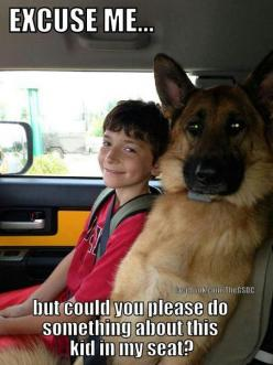 Love German Shepherds?  View Our Facebook Page https://www.facebook.com/pages/Dont-Hurt-Me-Im-Your-Best-Friend/636479679717238 & Join Over 9,000 Other Dog Lovers: German Shepherd Dogs, Germanshepherd, Animals, Funny Dogs, Excuse Me, Animal Funnies, Do
