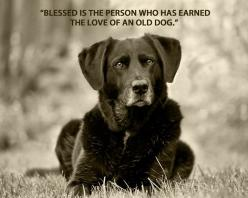 Love of an old dog :-): Doggie, Blessed, Animals, Old Dogs, Quotes, Olddogs, Pets, Friend