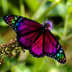 Majestic Butterfly: Beautiful Butterflies, Animals, Nature, Color, Flutterby