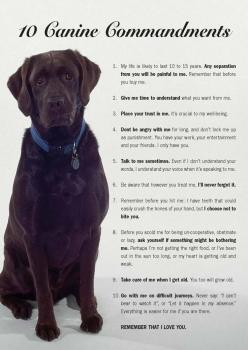 Makes me cry!!: Animals, Dogs, Pets, Puppy, Canine Commandments, Friend