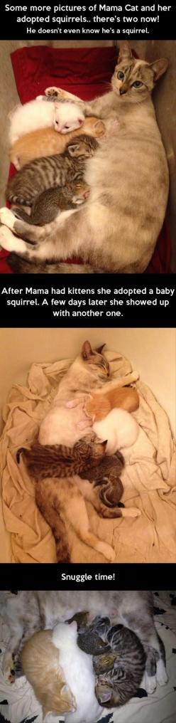 Mama kitty, baby kitties, baby squirrels.  Just a big, happy family.  <3: Cats, Sweet, Baby Squirrels, Adopted Squirrels, Cat Adopts, Adopts Squirrel, Kitty, Mama Cat, Animal