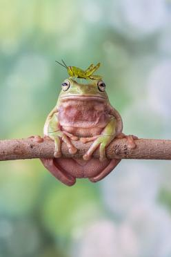 ~ me and my little friend ~ ✿ڿڰۣ   I'm on a Diet! by Lessy Sebastian on Fivehundredpx: Animals, Friends, Nature, Tree Frogs, Creatures, Photo