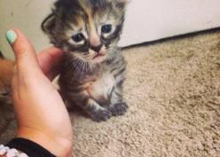 Meet Purrmanently Sad Cat, the adorable kitten who just happens to look sad all the time.: Cats, Face, Animals, Purrmanently Sad, Pet, Adorable Kittens, Sad Cat, Grumpy Cat, Kitty