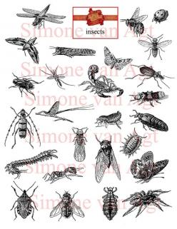 Meet the insects: Art Inspiration, Beautiful Tattoos Art, Insectos Terrestres, Insect Tattoo, Bug Illustration, Insect Inspiration