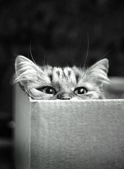 [Meow]: Cats, Animals, Kitten, Kitty Cat, Boxes, Chat, Peek A Boo