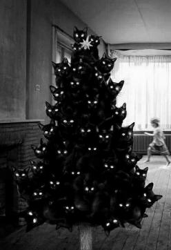 Merry Xmas Eve, love your favorite cat lady @Madisan Romrell Romrell Romrell Romrell Romrell Brooks: Cat Christmas, Black Cats, Crazy Cat, Cat Trees, Christmas Trees, Blackcat, Cat Lady, Animal