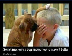 Mine always make it better ♡: Animals, Friends, Dogs, Sweet, Boxer, Pets, Puppy, Don T Cry, Kid