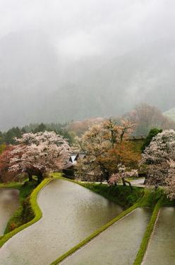 Mitake, Mie, Japan: Terrace, Japan, Nature, Travel, Places, Landscape, Photo, Cherry Blossoms