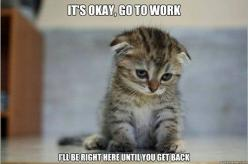 More like I'll just tear everything up while your gone: Cats, Animals, Pet, Funny, Now, Kittens, Kitty