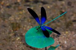 Most Beautiful Dragonfly | Recent Photos The Commons Getty Collection Galleries World Map App ...: Blue Dragonfly, Dragon Flies, Wallpaper, Google Search, Photo, Animal, Dragonflies