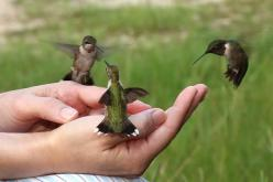 my bucket list.. to handfeed hummingbirds: Hand, Humming Birds, Animals, Kitchen Window, Gardening Outdoor, Hummingbirds