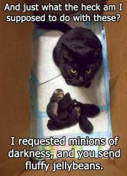 My cat ran when her first baby splated on the hard floor... that one was my favorite out of 7: Cats, Minions, Animals, Stuff, Funny, Fluffy Jellybeans, Funnies, Jelly Beans