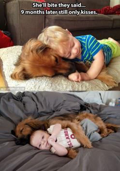 My dog can relate! Don't bring him around that baby, they said, he will bite, they said... Ok.. Go near my car when he's in there with her.. It won't be the baby he bites I promise!:): Kiss, Animals, Dogs, Sweet, Pet, Puppy, Baby, Friend, Kid